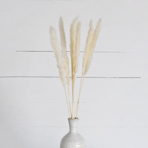 White Pampas Grass Set of 6 Natural Dried Stem