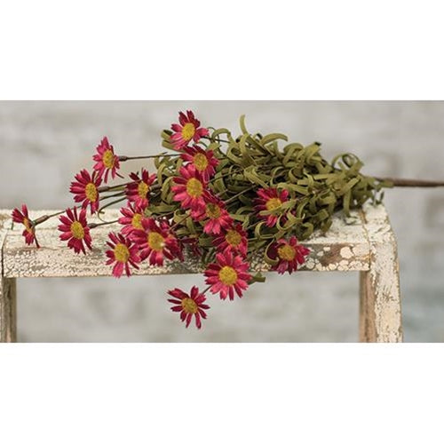 Mini Mountain Burgundy Daisy Bush