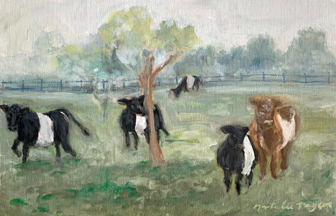 ISLAND BELTED GALLOWAY COWS - 12 X 7 3/4""