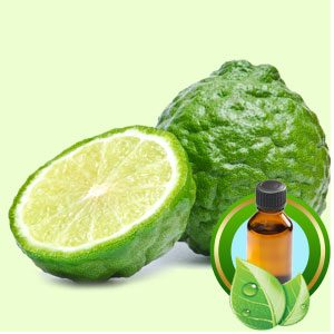 Oil - Bergamot Essential Oil 10 Ml