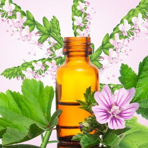 Oil - Patchouli Essential Oil 10 Ml