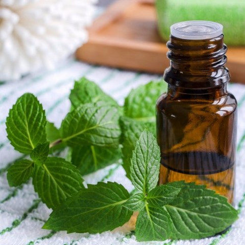 Oil - Peppermint Essential Oil 10 Ml