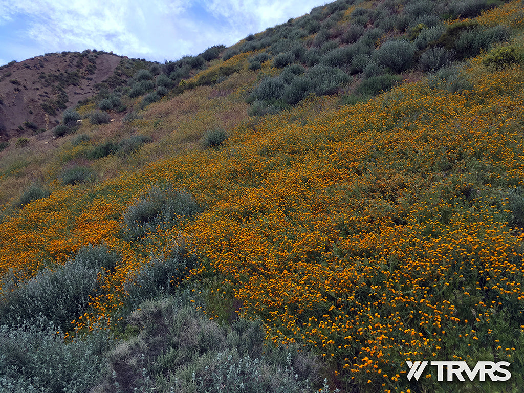 Sespe River Trail Los Padres National Forest - WILD FLOWERS | TRVRS APPAREL