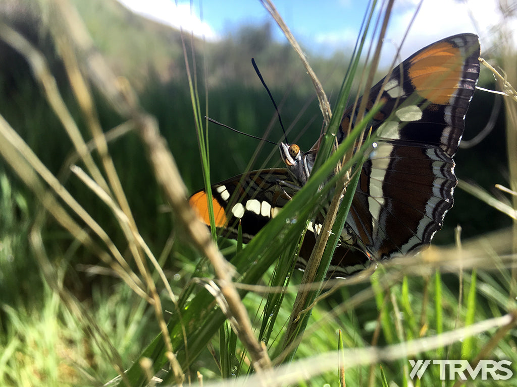 Sespe River Trail Los Padres National Forest - BUTTERFLY | TRVRS APPAREL