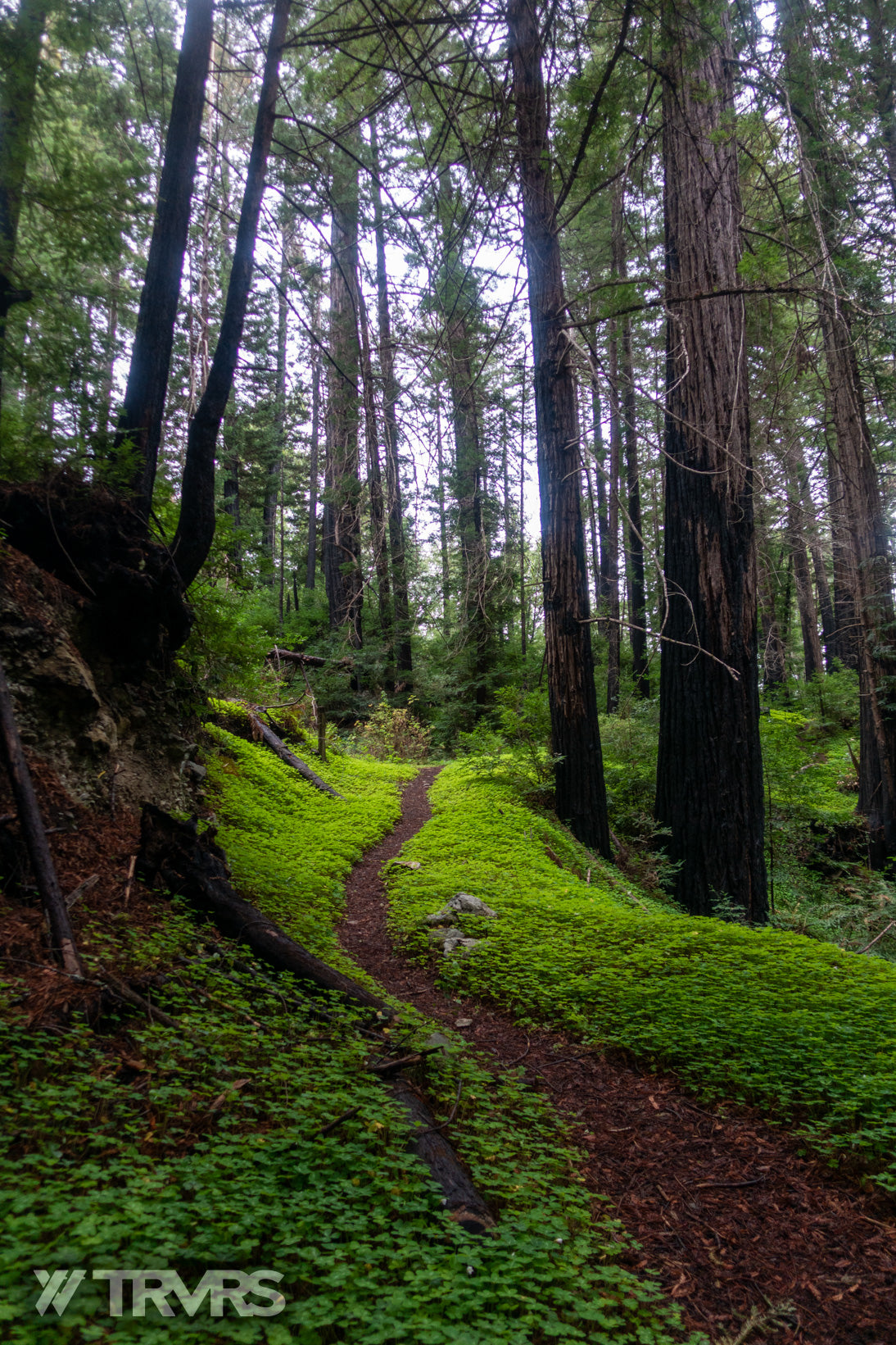Twitchell Road -Sea To Sky | TRVRS Outdoors Big Sur, Central California, Pacific Coast, Los Padres National Forest, Santa Lucia Mountains, Hiking, Trail Running, Mountaineering