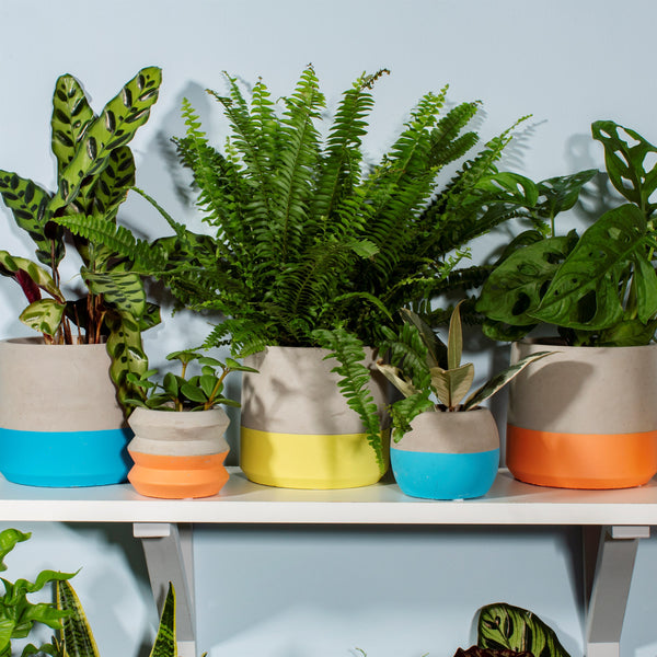 Colour Block Cement Planters - Style My pad