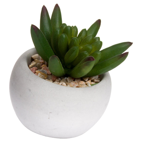 Miniature Little Jewel Succulent In Cement Pot - Style My Pad