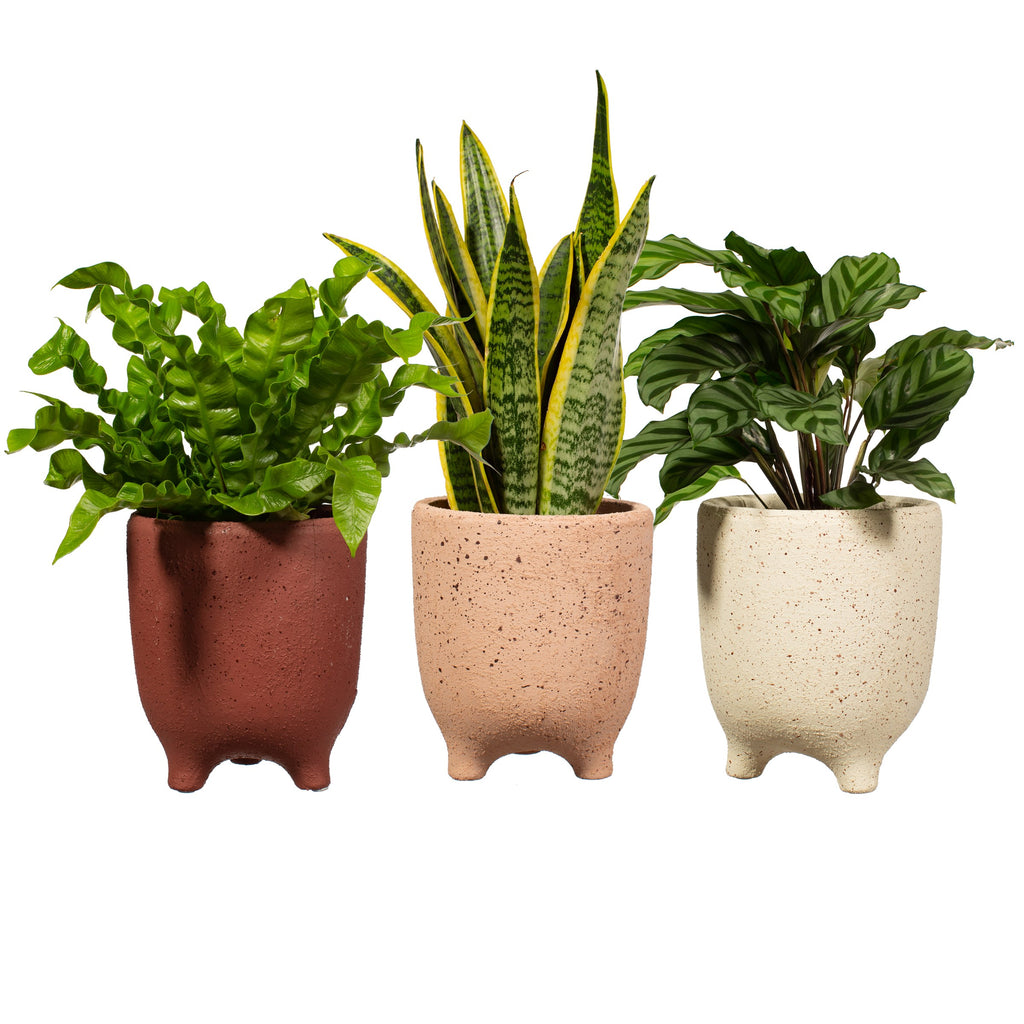 Speckled Leggy Planter Large 3 Assorted - Style My pad
