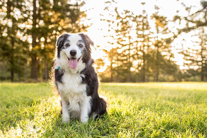 How Much Daily or Weekly Exercise Does a Dog Need?