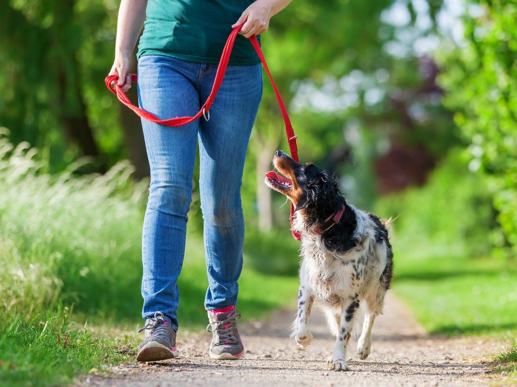 Why walking your dog is good