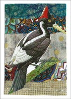 Ivory-billed Woodpecker<br>by Liz Cohn