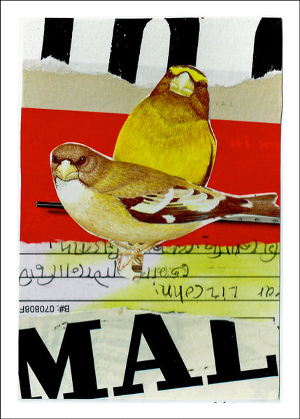 Evening Grosbeak<br>by Liz Cohn