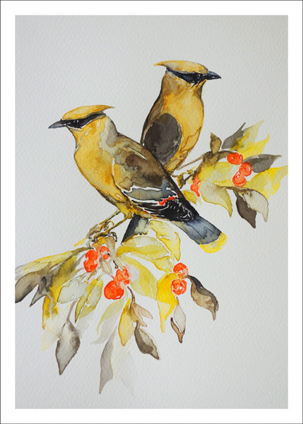 Cedar Waxwing by Nancy Tomczak