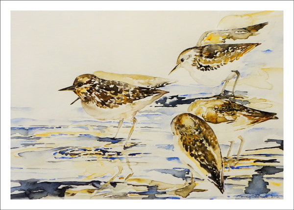 Sandpipers at Oakledge Park by Nancy Tomczak