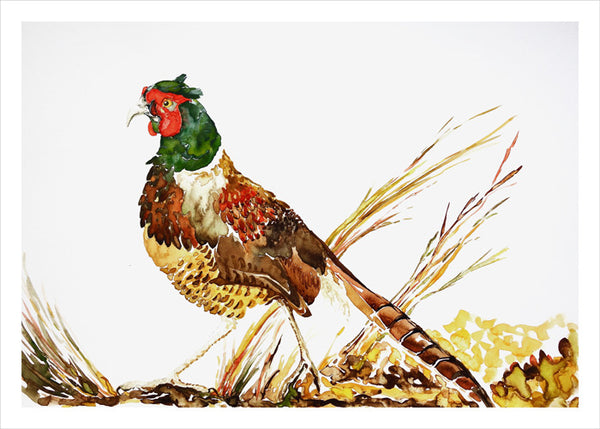 Pheasant by Nancy Tomczak