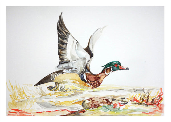 Wood Duck in Flight by Nancy Tomczak