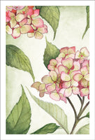 Grateful Pink Hydrangeas