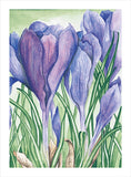 Grateful Crocus