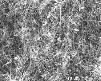 Silicon Carbide Nanowires A75 (350nm×75µm)
