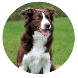 Border Collie Dog Snap Charm 20mm - Snap Jewelry