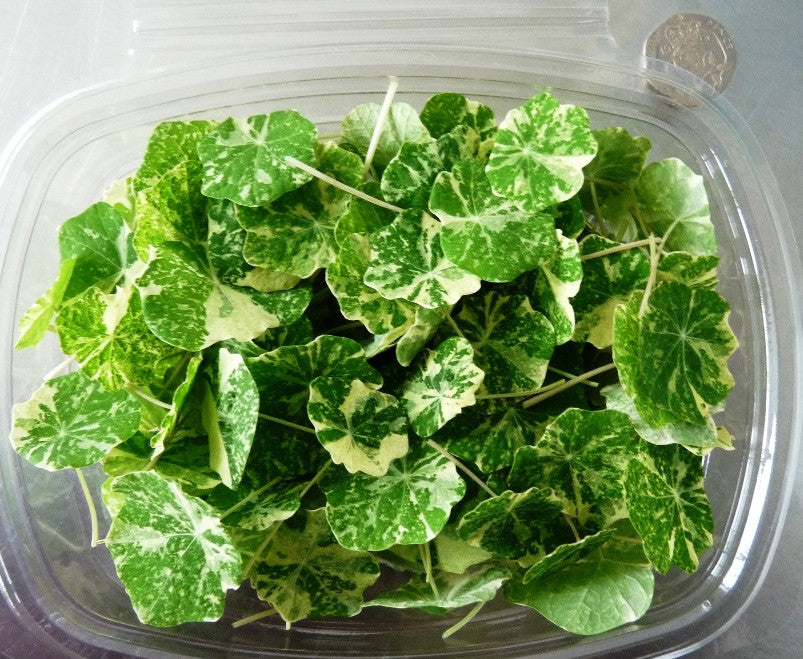 Nasturtium Leaves (Quarter Size) - Individual Cut and Prepped Portion