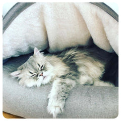 Persian cat sleeps inside a covered cat cave bed