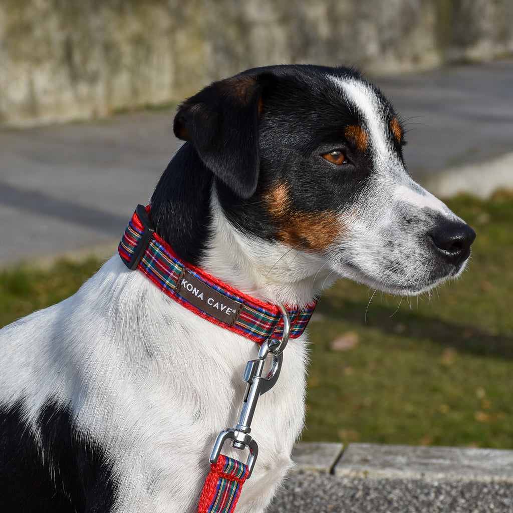 KONA CAVE® Royal Stewart Red Tartan Collar and Leash with Sliding Hook on Jack Russell Terrier Dog