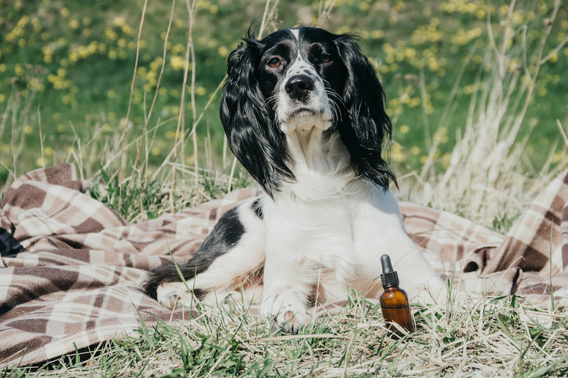 CBD for Pets 101: Health Benefits, Uses, Safety, and Everything Else You Need to Know