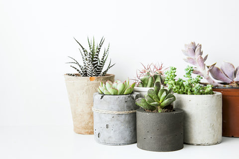 Succulents Best Office Plants