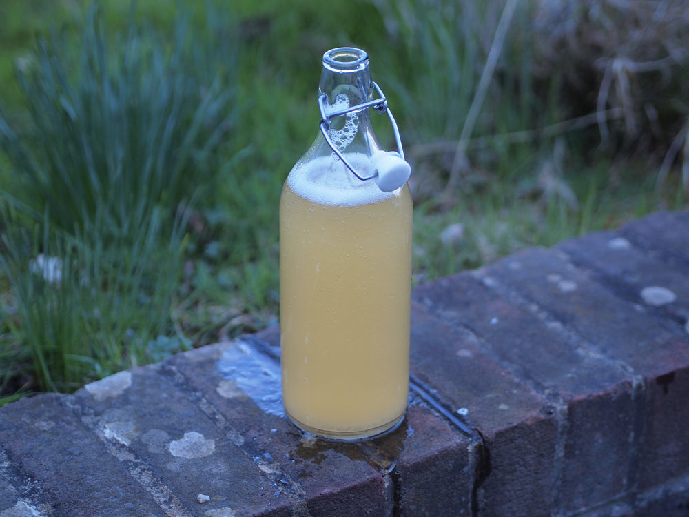 Birch Sap Beer Homemade Homebrew Natural