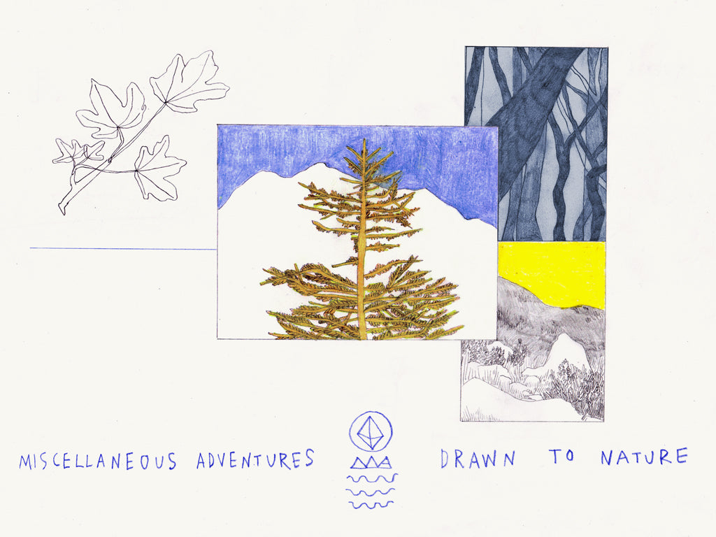 Drawn to Nature Journal Esther McManus Miscellaneous Adventures