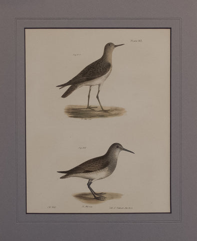 The Ruff, The Red-breasted Sandpiper
