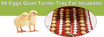Automatic 60 Egg Incubator - Poultry Chicken Duck Quail Turkey Birds-Rooster Farms-ozdingo