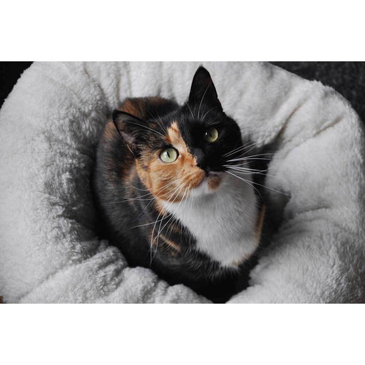 Soft Cat Bed Brown Suede | Warm Kitten Puppy Round Doughnut Donut Lambswool AFP-All For Paws-ozdingo