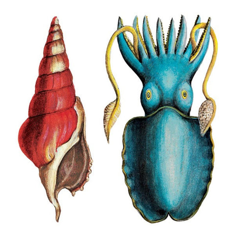 Calamary - Set of 2