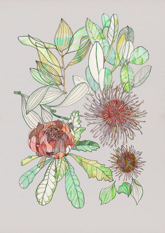 Art Print - Waratah and Hakea