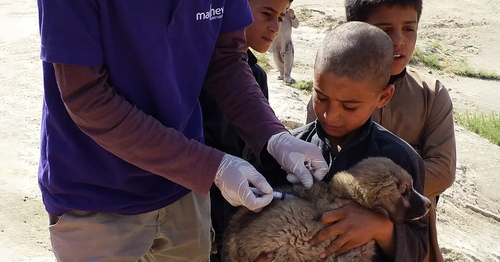 The Edgard & Cooper Foundation's charity partner is saving lives by eradicating rabies - starting in Kabul