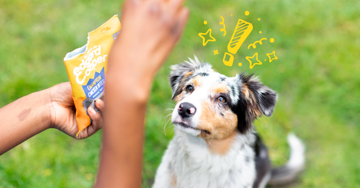 4 fun and easy dog tricks with step-by-step plans