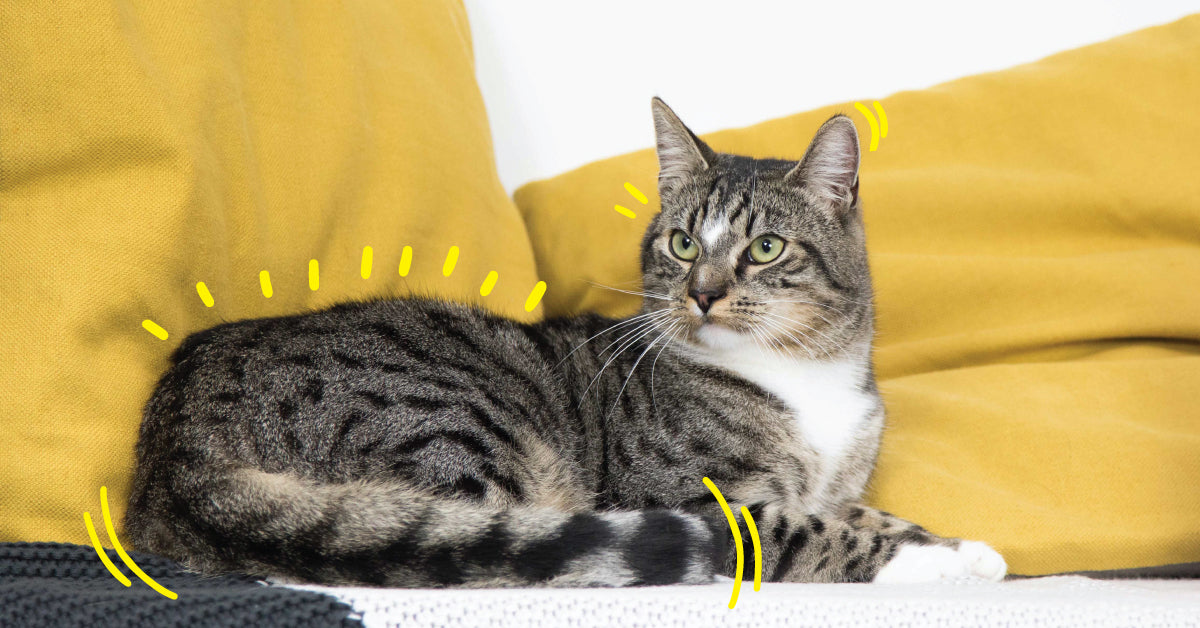 Reading a cat's body language: the tail and whiskers