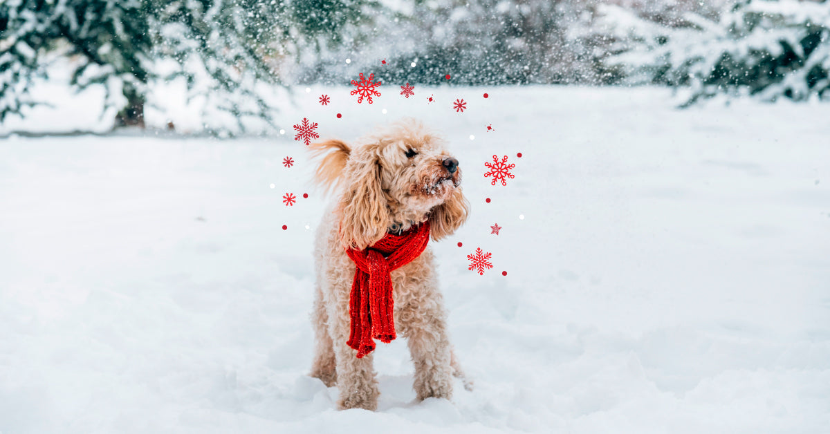 Winter safety guide for dogs