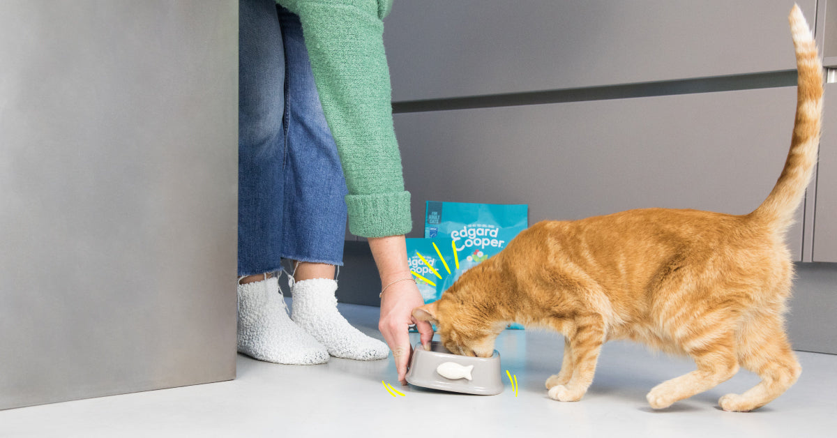 Feeding tips for a neutered cat