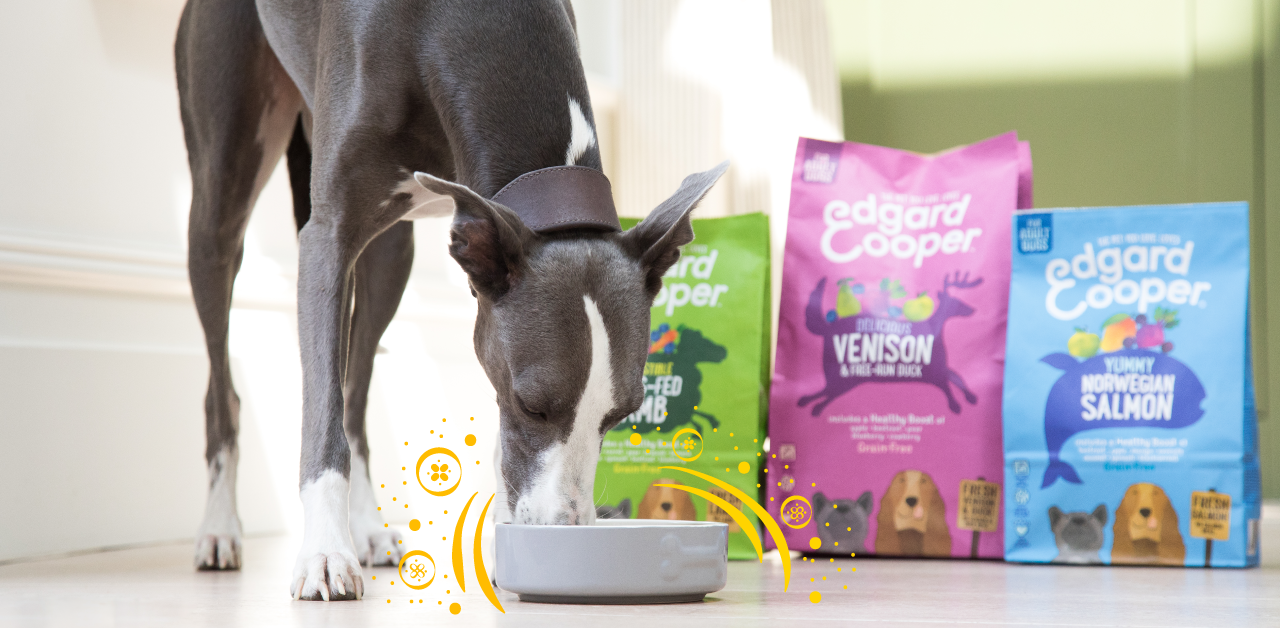 Allergy intolerance: Everything you need to know about hypoallergenic dog food