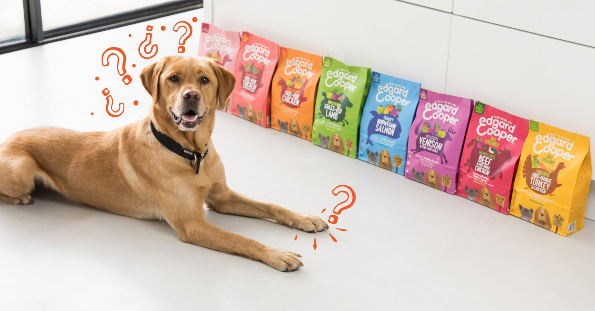 What's the perfect food for my dog?