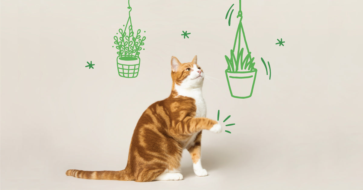 7 safe plants for cats and dogs