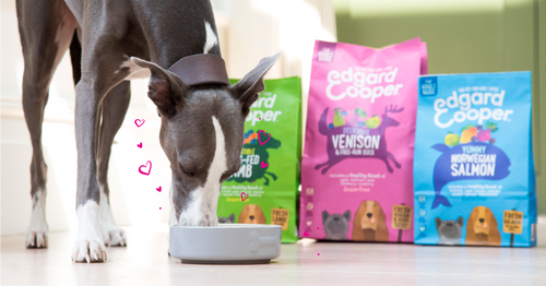 Choosing the perfect food for dogs with sensitive tummies