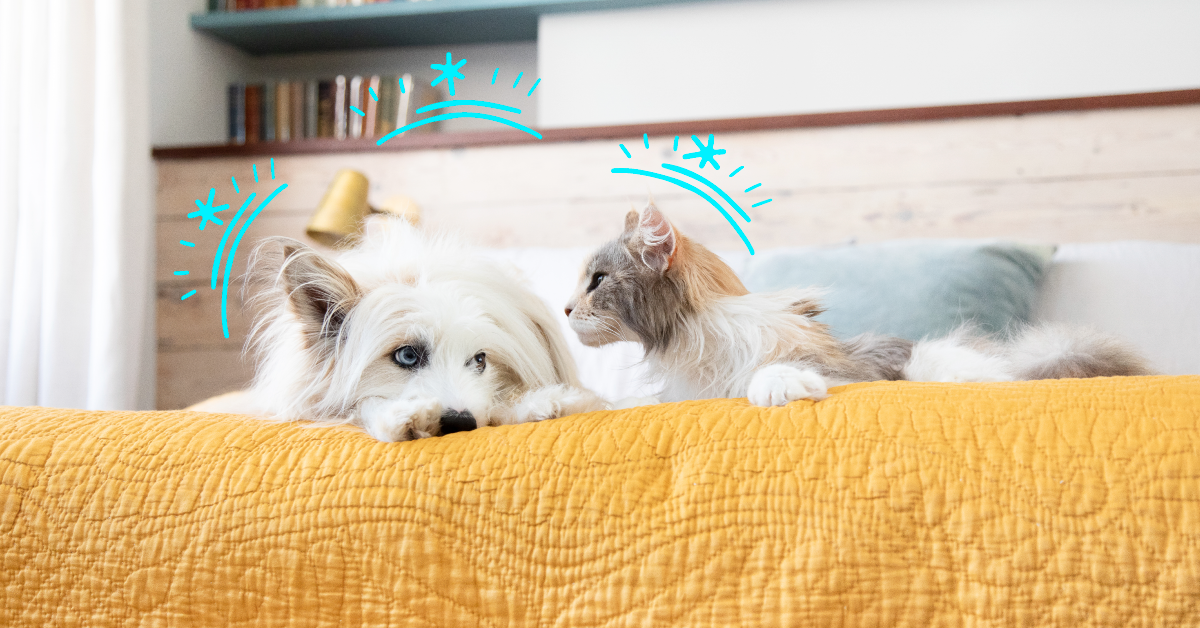 How to Prevent Fleas on Dogs and Cats