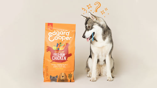 Grain-Free Dog Food: All You Need to Know
