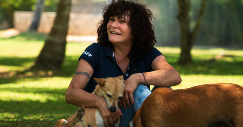 Feeding & treating 1000 stray dogs a week: the Marina Möbius story