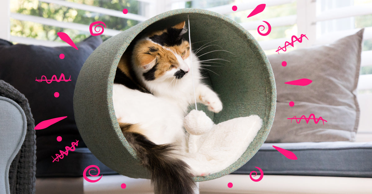 7 tips to cat-proof your home