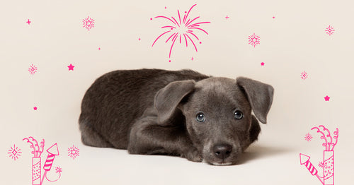 6 tips to reduce the fear of fireworks